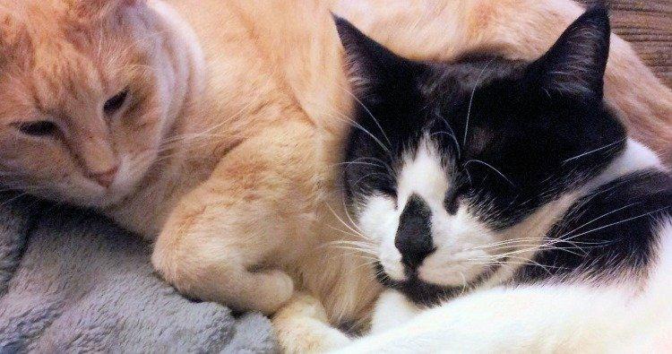 adopted kitties